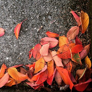 Autumn leaves by Asrais