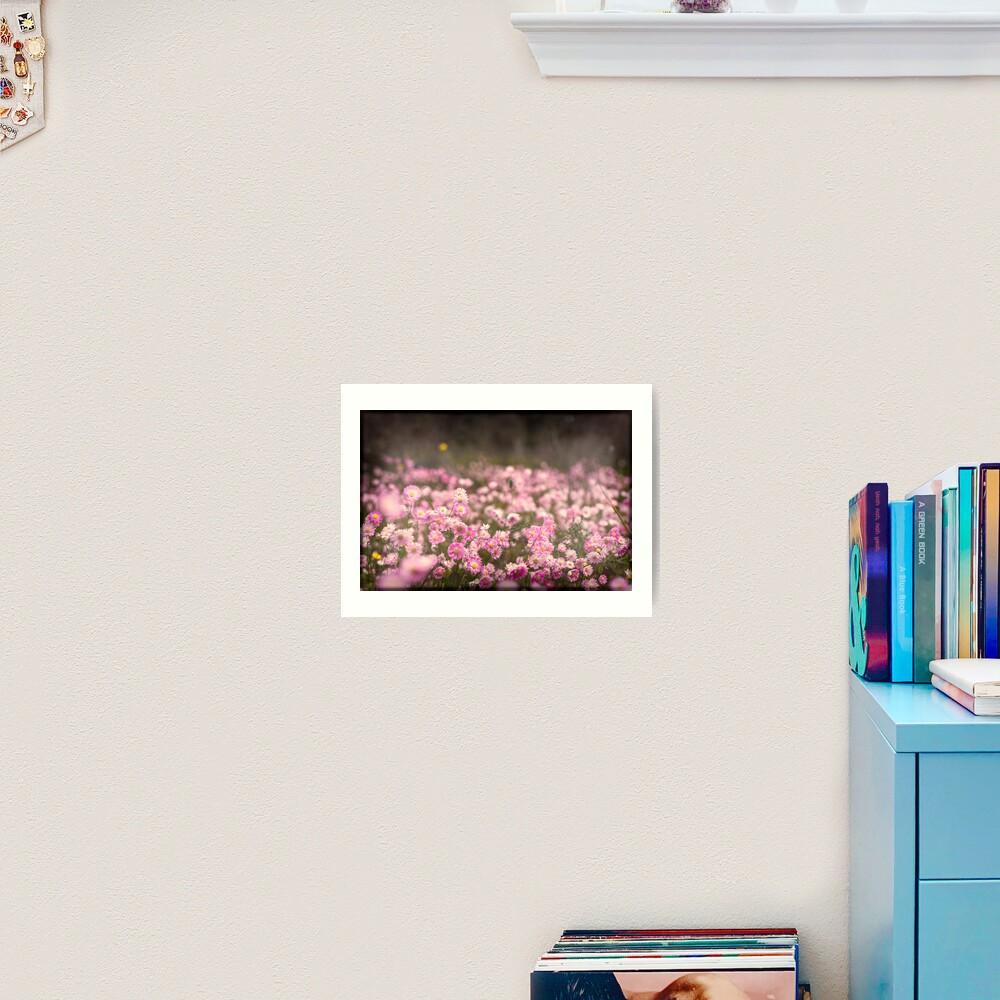 Pink Everlastings Art Print