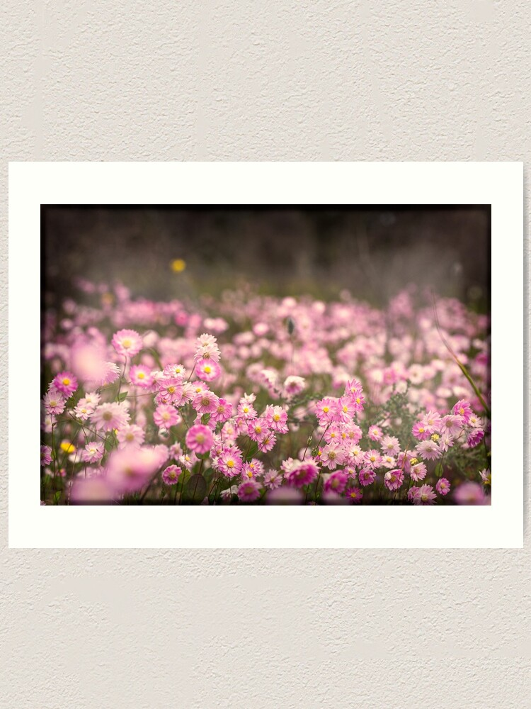 Alternate view of Pink Everlastings Art Print