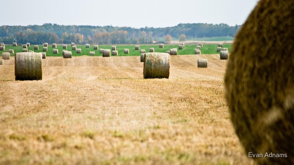 Hay! by Evan Adnams
