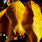 Autumn Leaves by newbeltane
