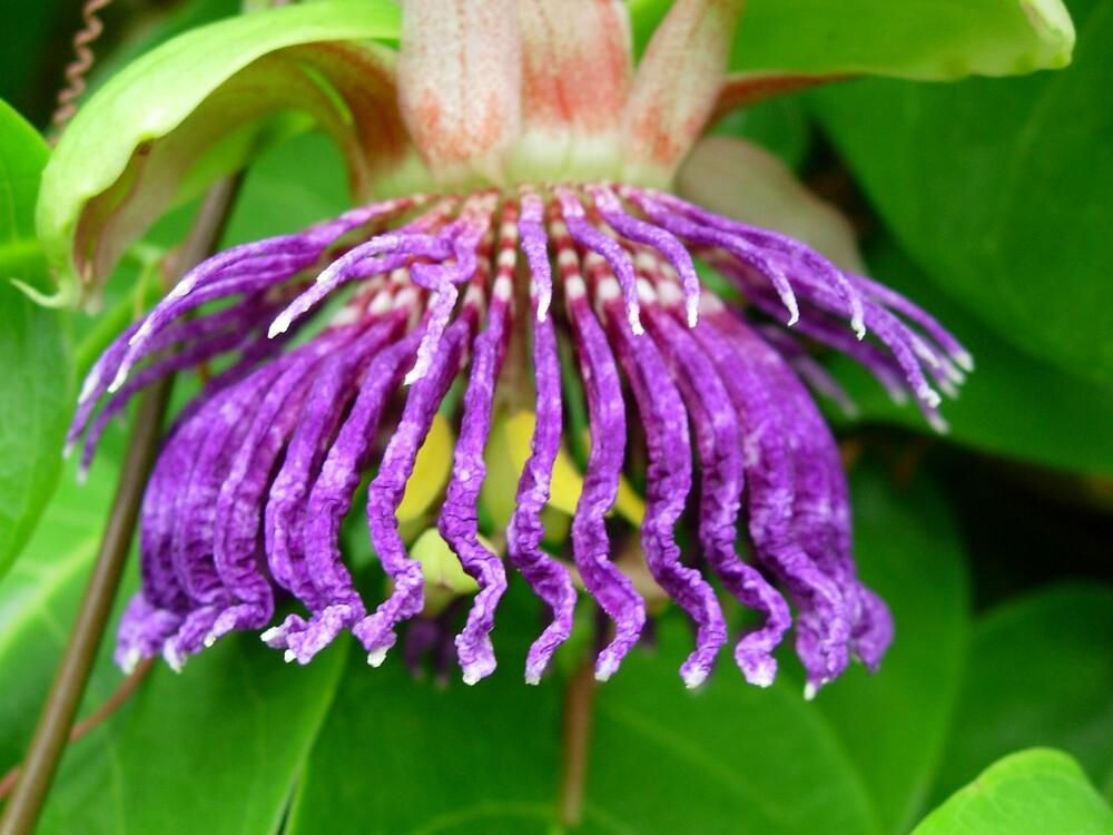 Pretty Purple by Schock100