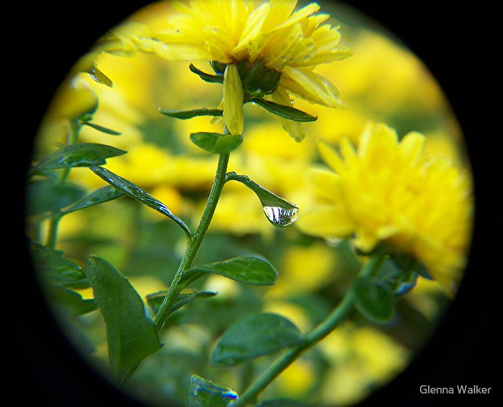 Yellow Mum Surprise by Glenna Walker