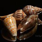 Florida Seashells by Mattie Bryant