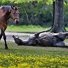 Rolling Around in the Dirt by TJ Baccari Photography
