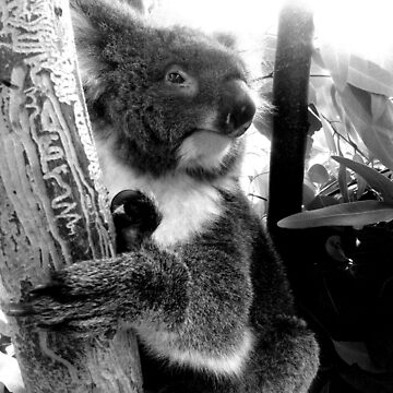 Koala by hoganartgarage