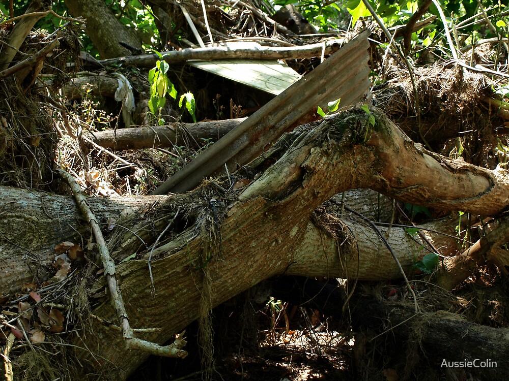 Stump Tree by Colin Van Der Heide