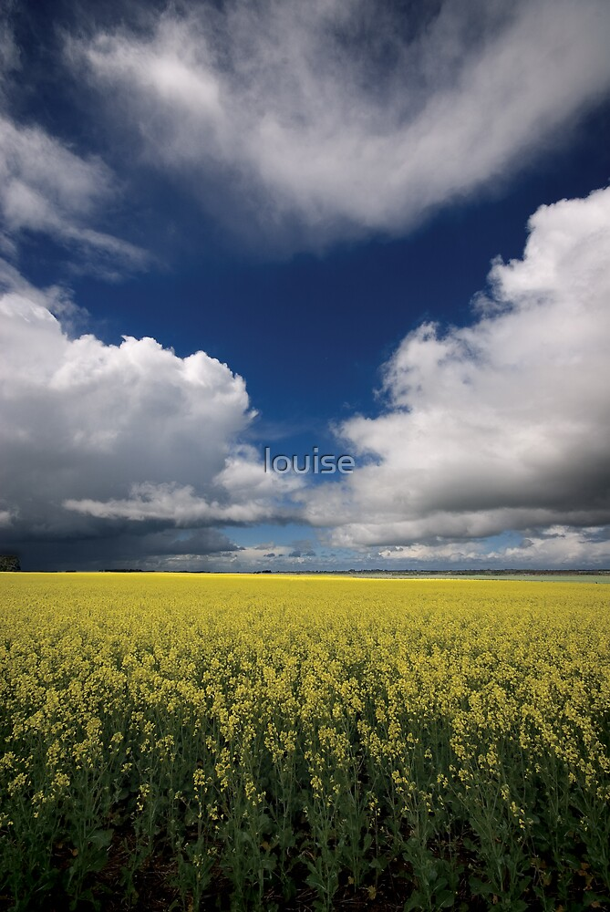 canola fields by louise