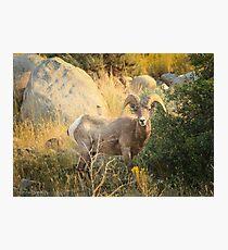 Catching the Sunrise 2 Photographic Print