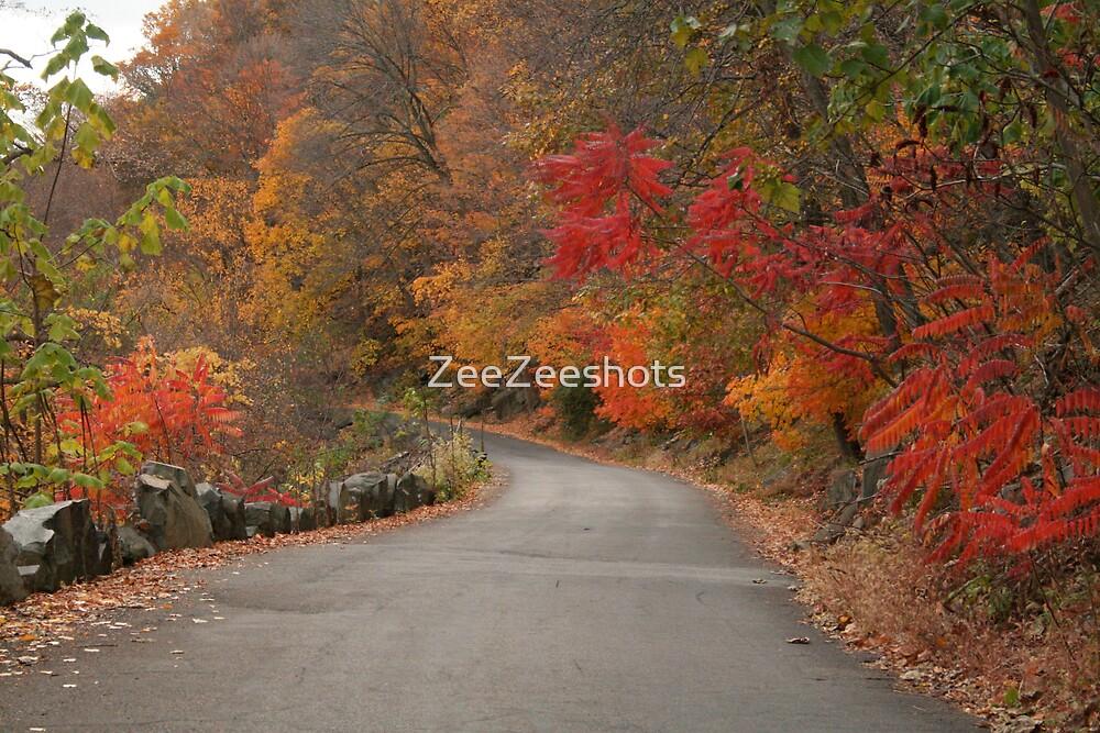 The Road by ZeeZeeshots
