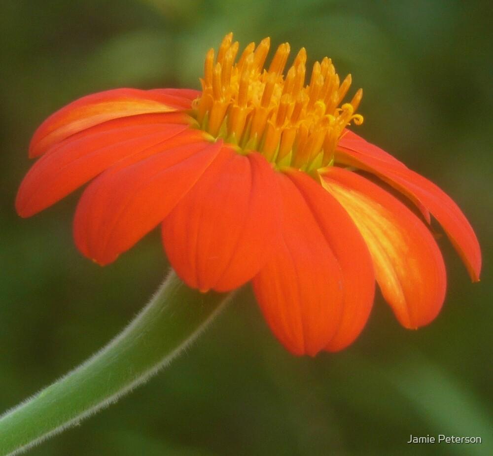 Autumn Flower by Jamie Peterson