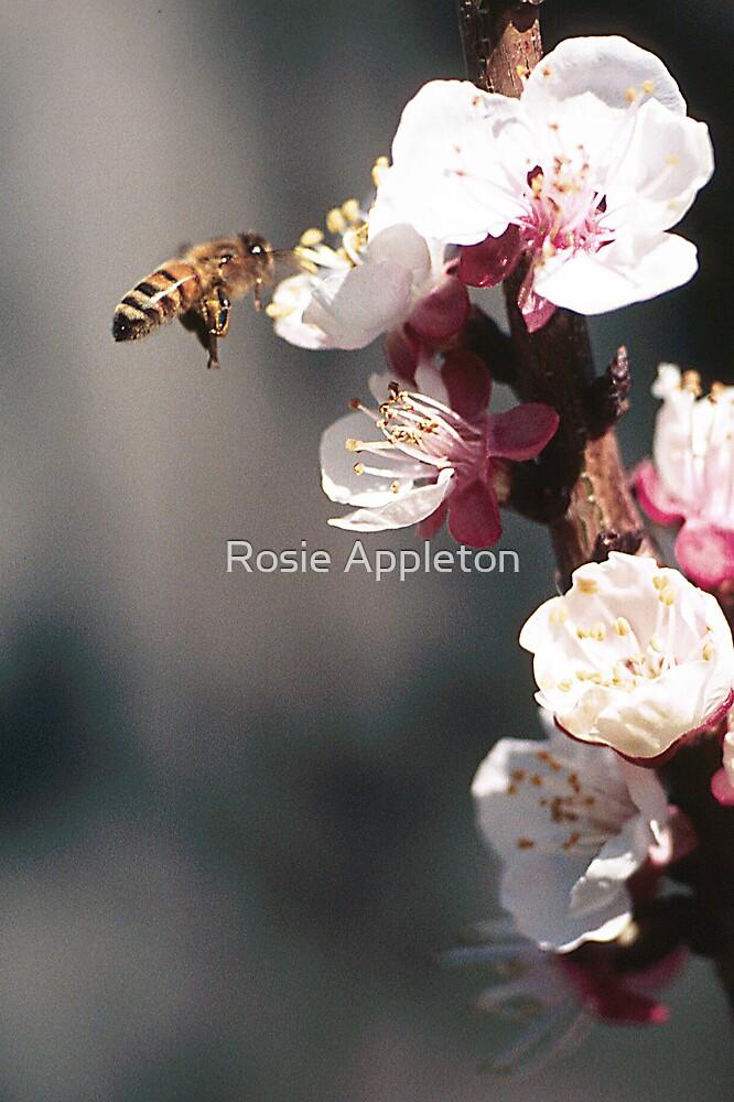 It's Spring!! by Rosie Appleton