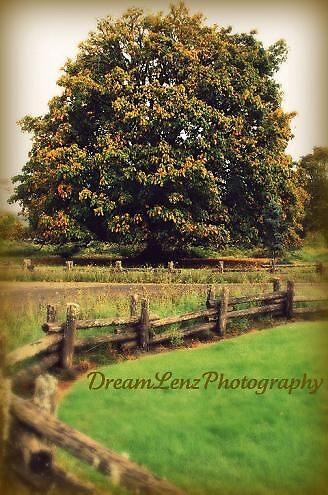 Dream Tree by dreamlenz