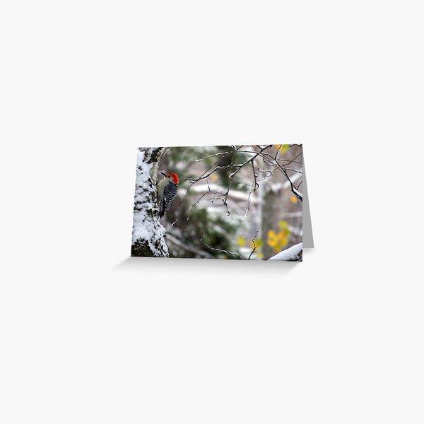 Male Red-bellied Woodpecker in a Snowy Tree Greeting Card