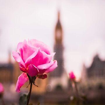 London rose by themonastery
