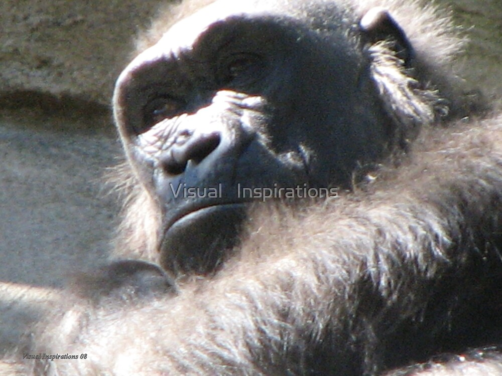 """""""The Thinker"""" by Visual   Inspirations"""