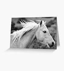 Palomino      Greeting Card