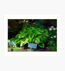 Agavaceae Hosta X Wide Brim Art Print