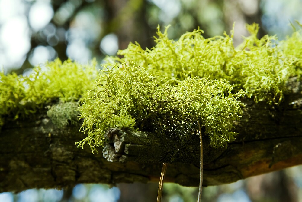 Moss by Shawn Fennell