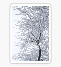 Winter Frost - Frozen Tree - Cool Nature Abstract Design Sticker