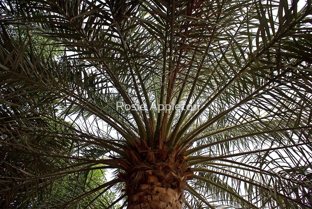Date Palm by Rosie Appleton