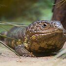 Lizard by abstruse