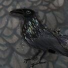 The Rough Raven   by jennyjeffries
