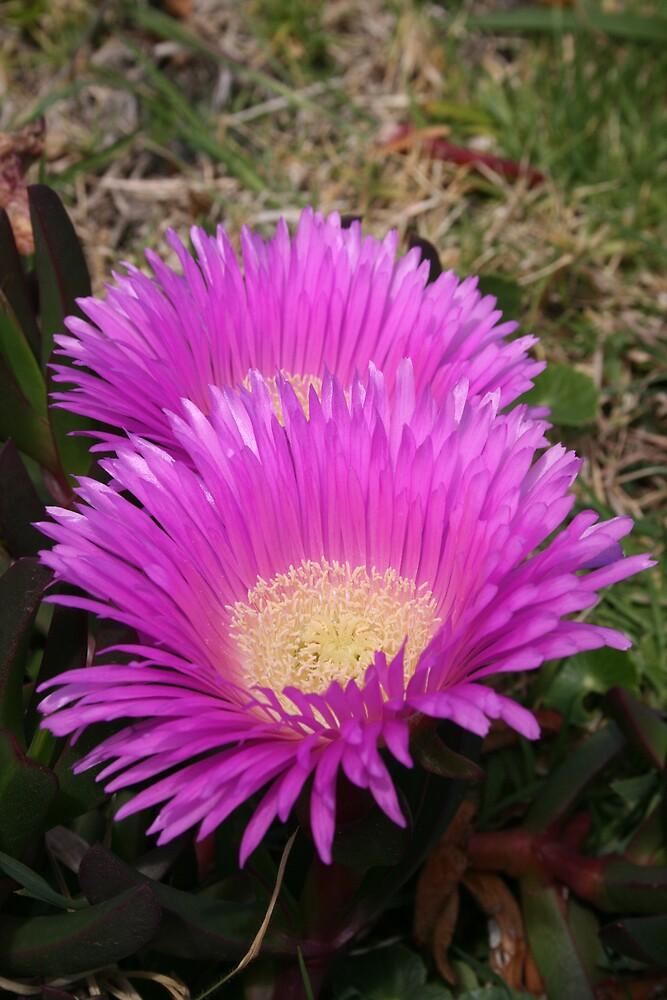 Pink flower by photosbyjase