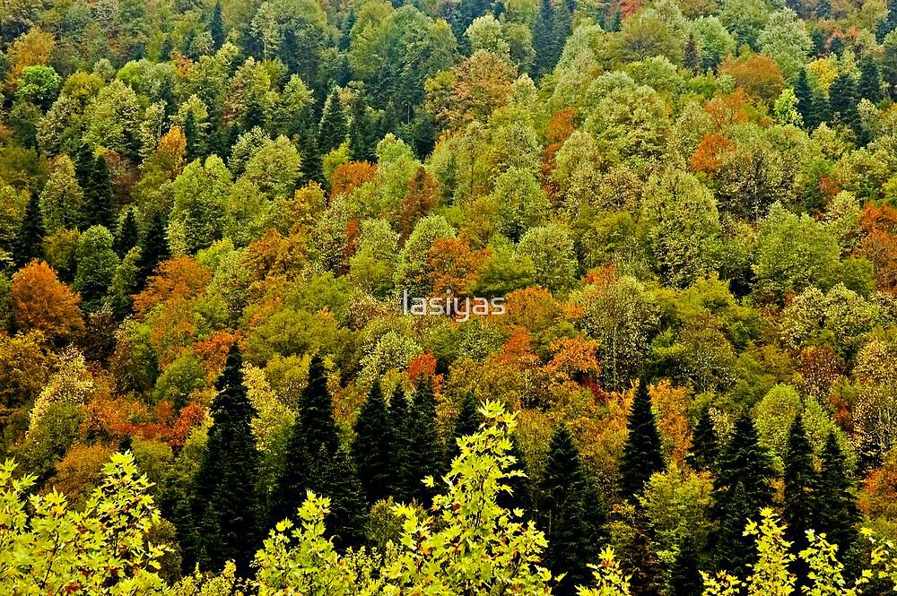 Autumn by lasiyas