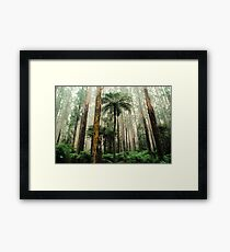 Mountain Ash Forest. Framed Print