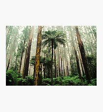 Mountain Ash Forest. Photographic Print