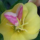 Butterfly on Flower by Bean8bird