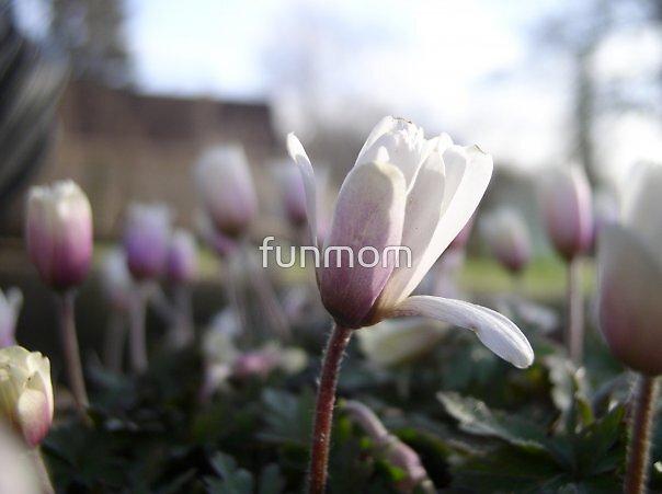 Little Flowers by funmom