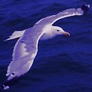 Seagull Flying Over the Sea by emilypigou