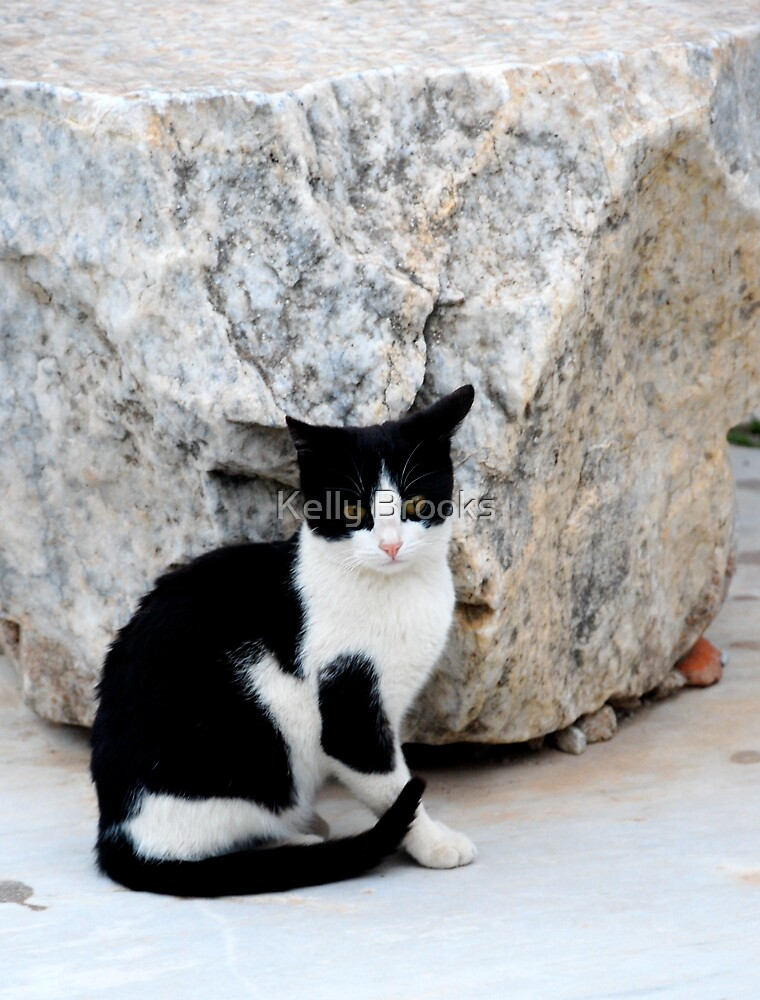 Grecian Kitty by Bromoson Photography