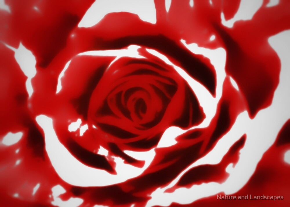 Painted Red Rose by Nathan Little