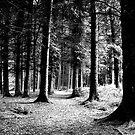 """""""Walk in the Wood"""" by Bradley Shawn  Rabon"""