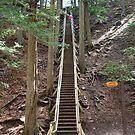 Jacobs Ladder (175 steps) - Truro Nova Scotia by AnnDixon