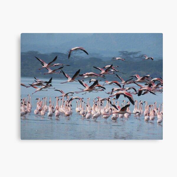 Flamingoes in flight  Canvas Print