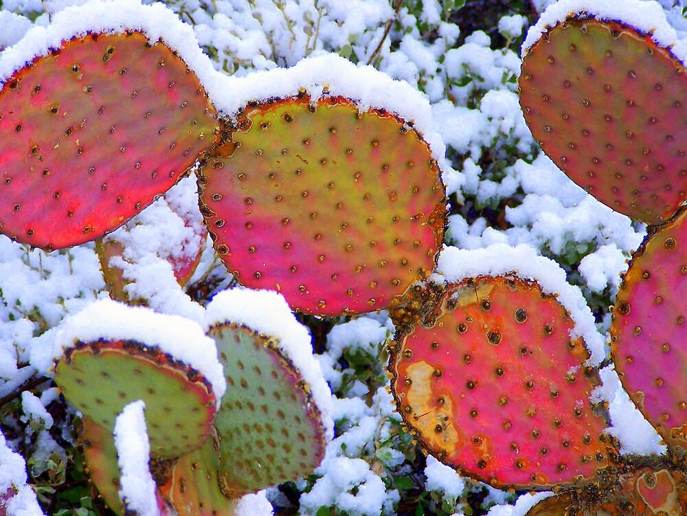 Sonoran Snowfall by Stephanie  Newbold