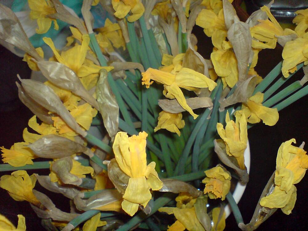 dead daffodils by hannahedwina