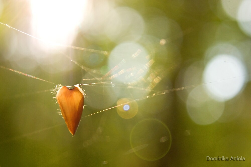 Hanging by Dominika Aniola