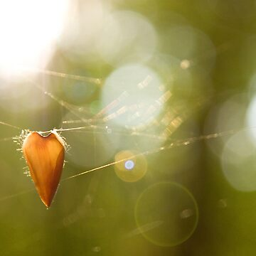 Hanging by domcia