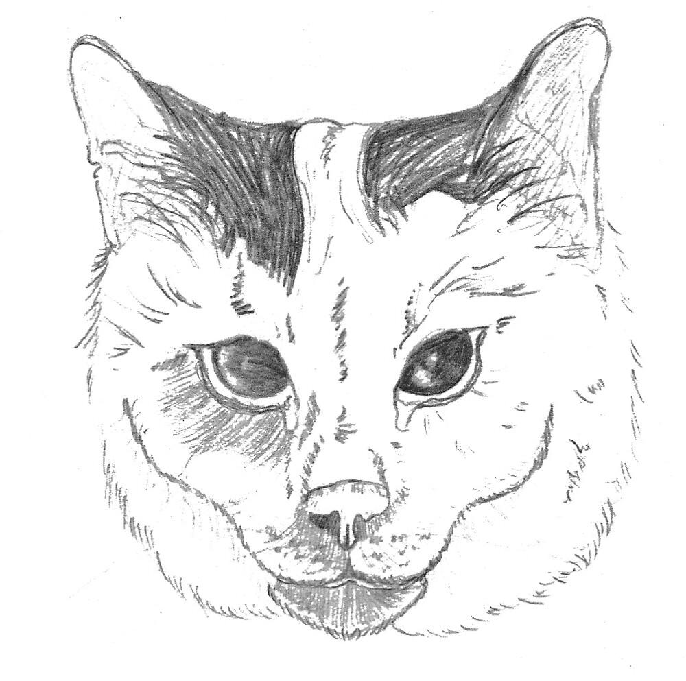 Cat Face by Jeffrey Neumann