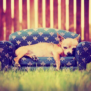 Cute Chihuahua Dog on a Sofa by DV-LTD