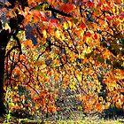 Autumnal tree by annalisa bianchetti