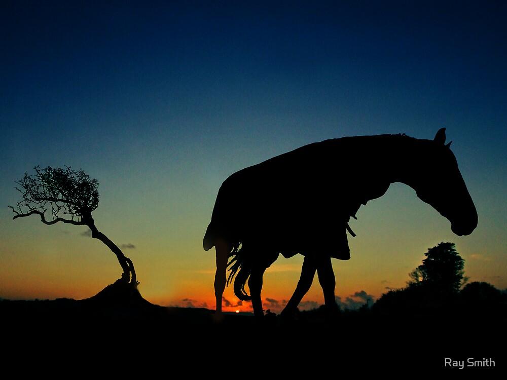 Sundown horse by Ray Smith