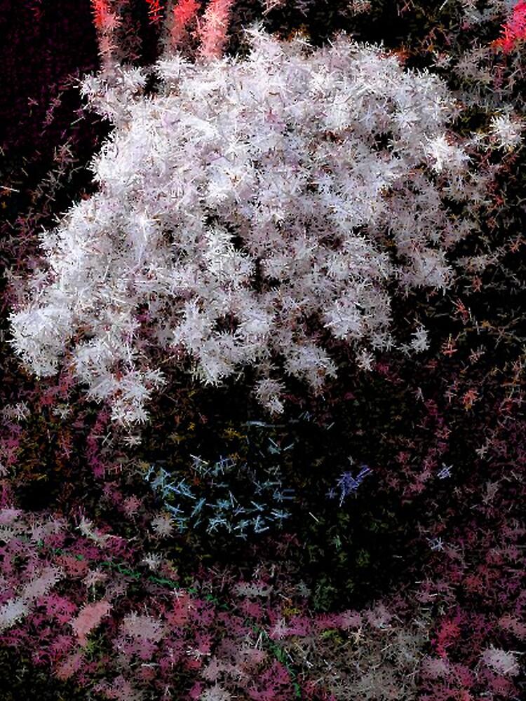 Crystalised by Julia Mainwaring-Berry