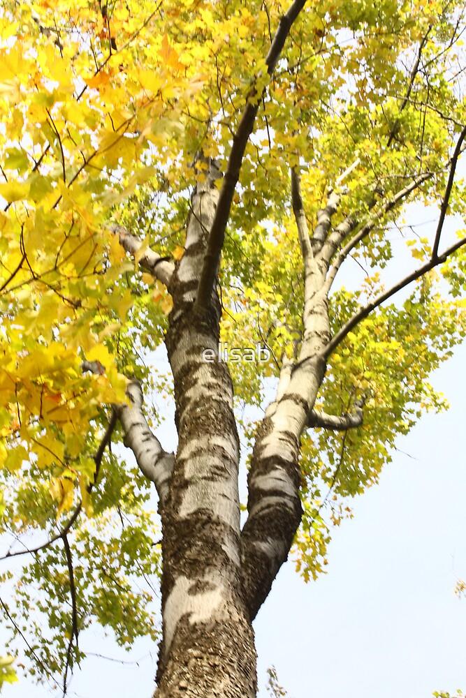 Fall trees by elisab