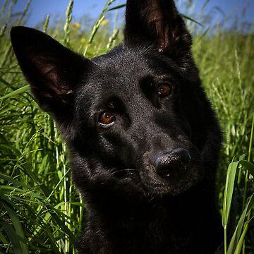 german shepherd black by marasdaughter